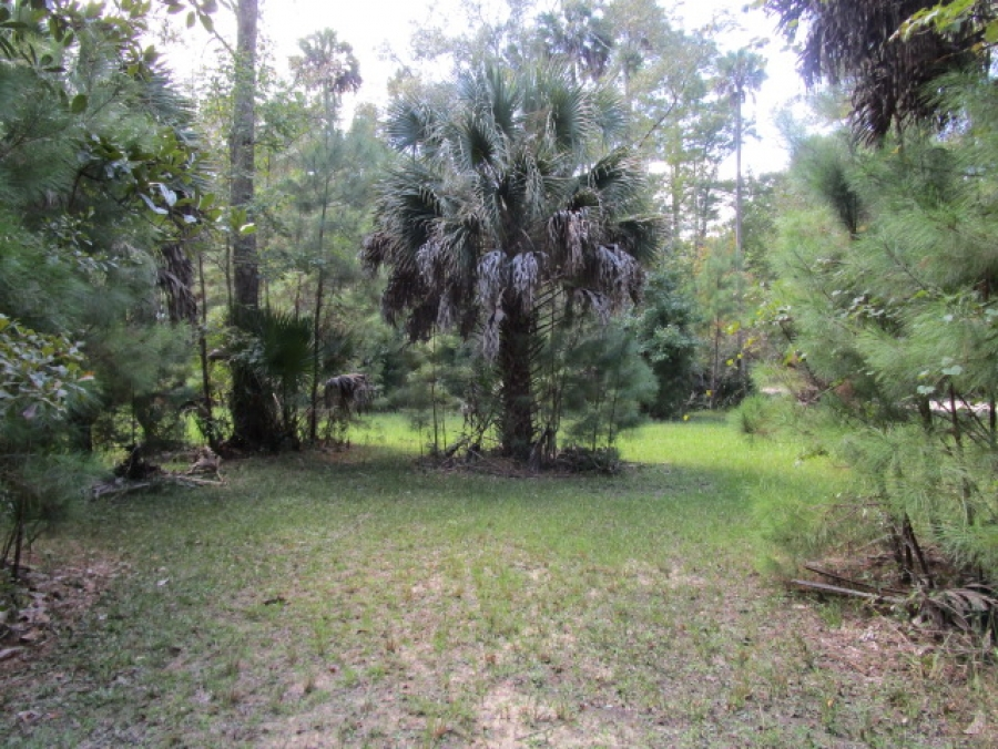GREAT LOT FOR YOUR HUNTING CAMP